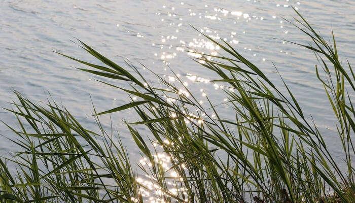 glittering lake and grass