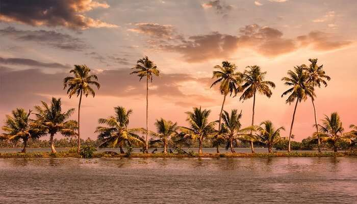 Alleppey's view