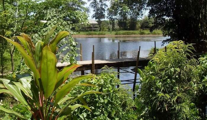 short trail inside the Khao Phra Thaeo National Park