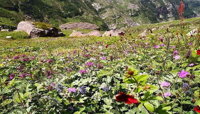 best time to visit parvati , himachal