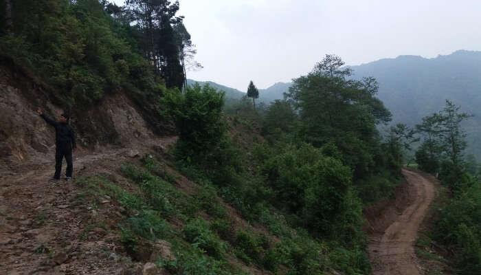 trekking trail in lush greenery