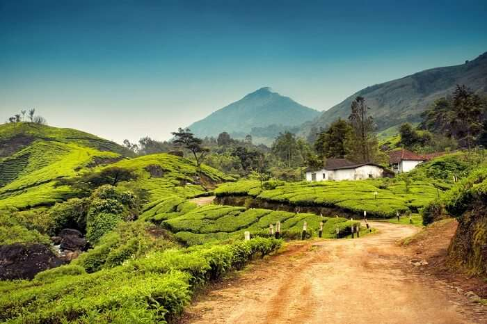 Munnar honeymoon places