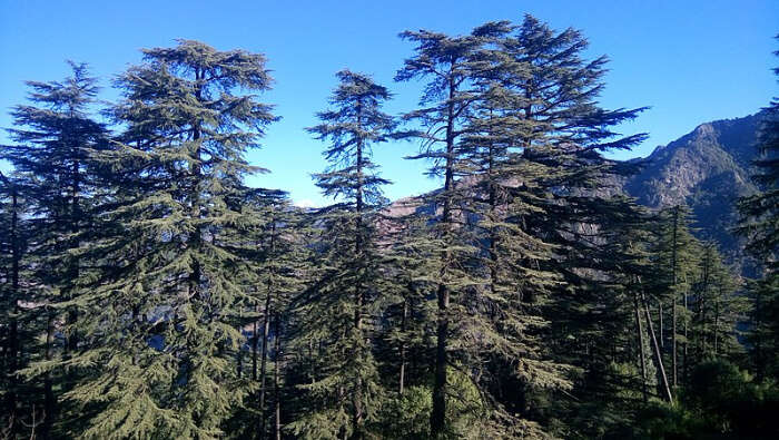 Dhanaulti Eco Park in Kanatal
