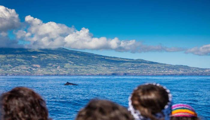sea whales