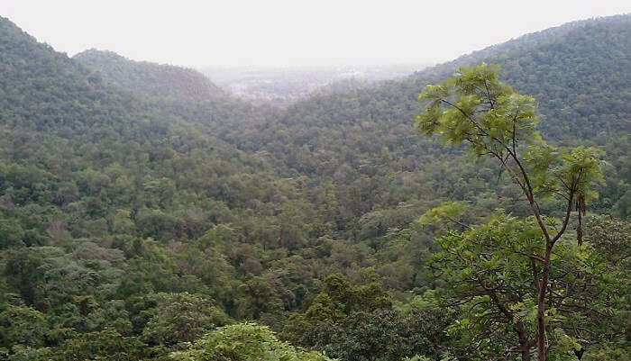 hill covered with dense forest