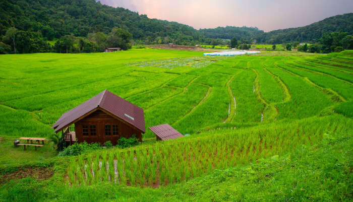 Homestays In Kohima cover
