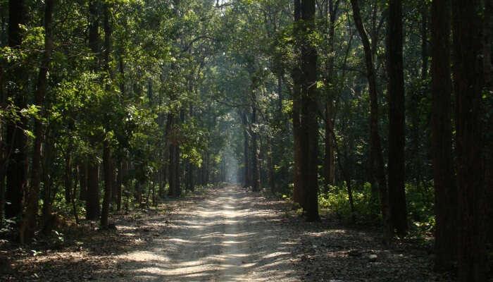 trail in a  jungle