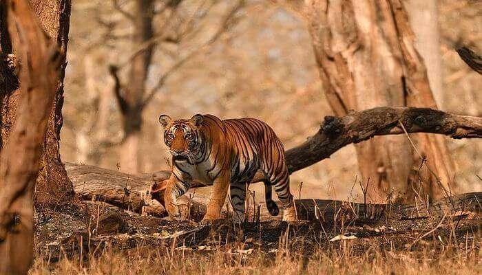 Witness Wildlife In Natural Habitat