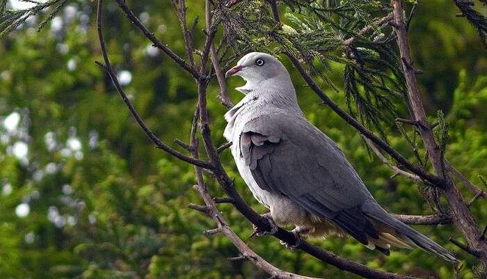 Kitam (Bird) Wildlife Sanctuary