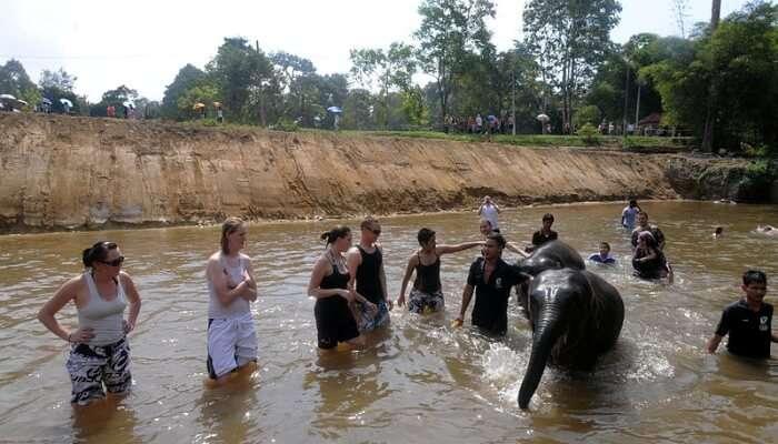 Kuala Gandah Elephant Conservation Center in Genting