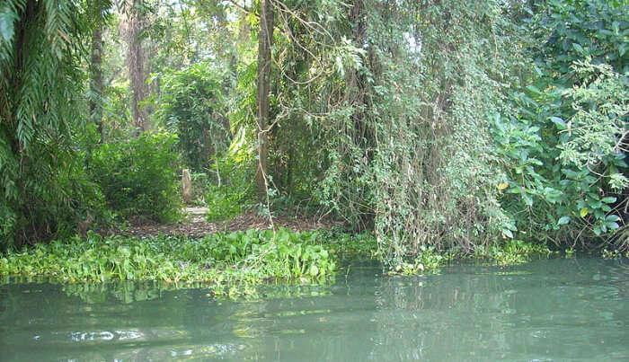 Bird Sanctuary in Kottayam