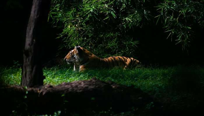 biggest tiger reserve in India