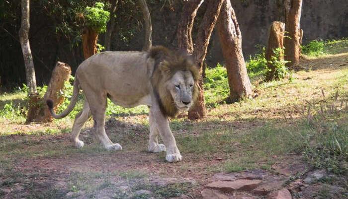 Zoological Park in Odisha