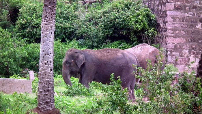 Nehru Zoological Park in Hyderabad
