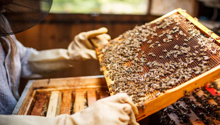 Planet Bee Honey Farm