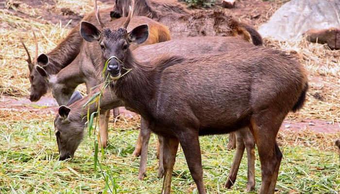 Bannerghatta National Park in Bangalore