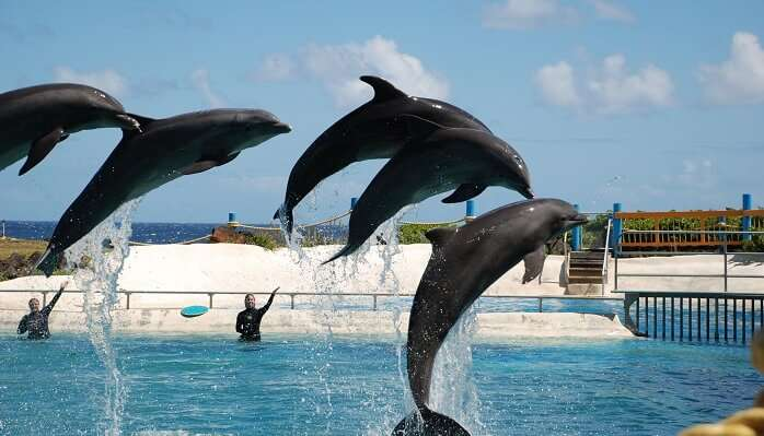 Enjoy Watching Dolphins