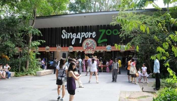 people standing in front of Singapore Zoo