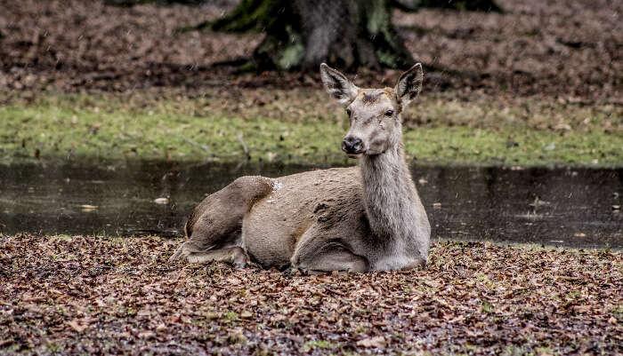Animal sitting in Garden
