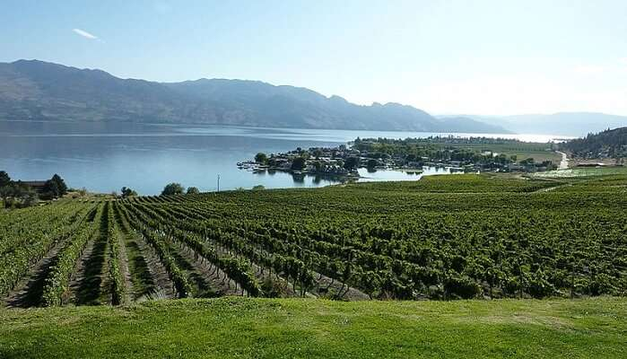 Vineyard Hopping in Okanagan Valley
