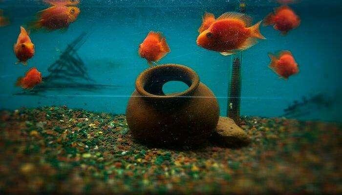 Cubbon Park Aquarium View