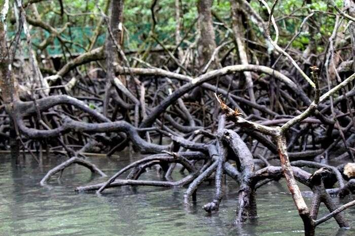 Mangrove creek, Andaman