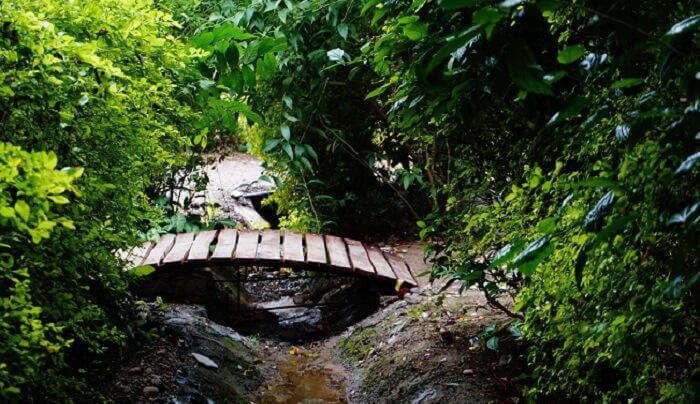 A Small Wooden Bridge