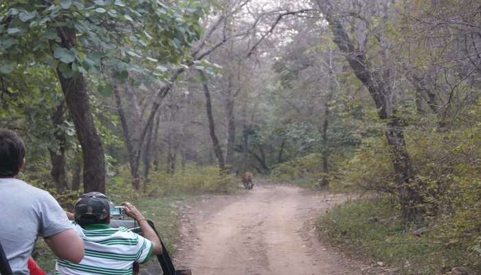Best Jungle Safari Near Bangalore