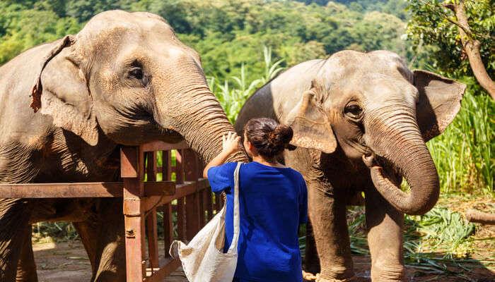 wildlife sanctuary in thailand