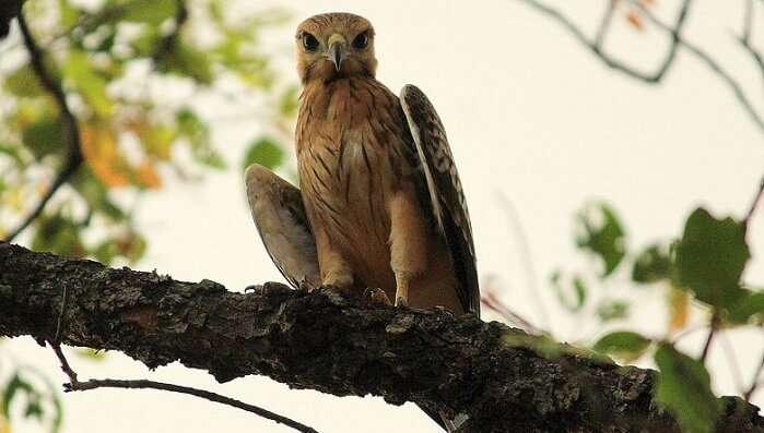 owl in wildlife sanctuary nagpur