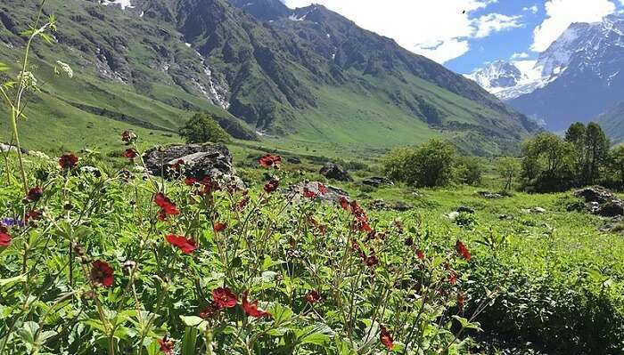 valley-of-flowers1