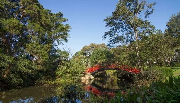 wollogong garden