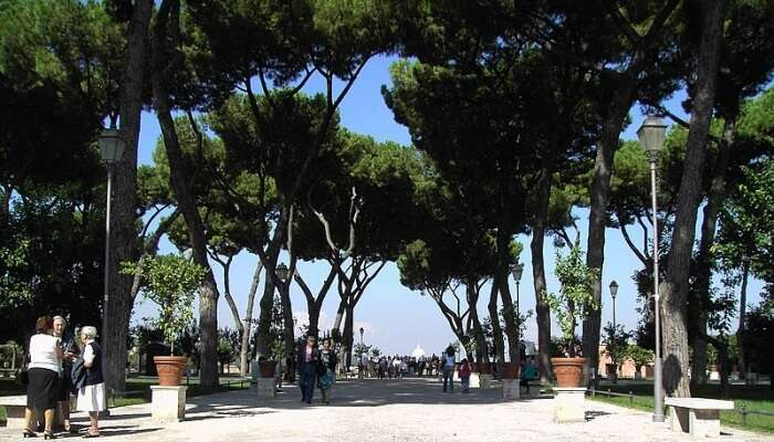 people standing under the shade of trees