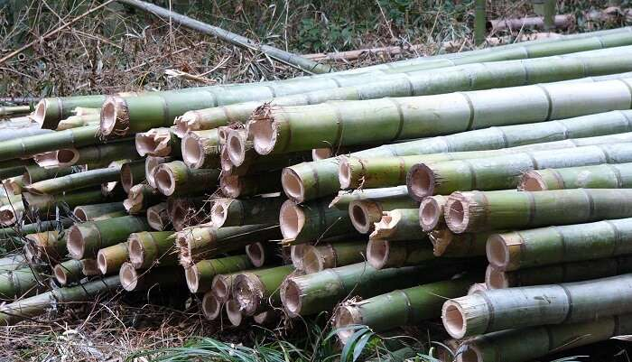 Bamboo Processing uravu
