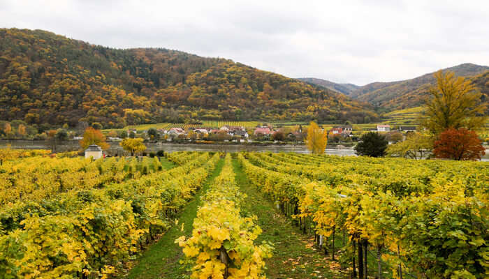 Be A Part Of The Danube Wine Tour