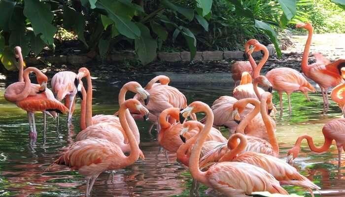 the bird's natural habitat
