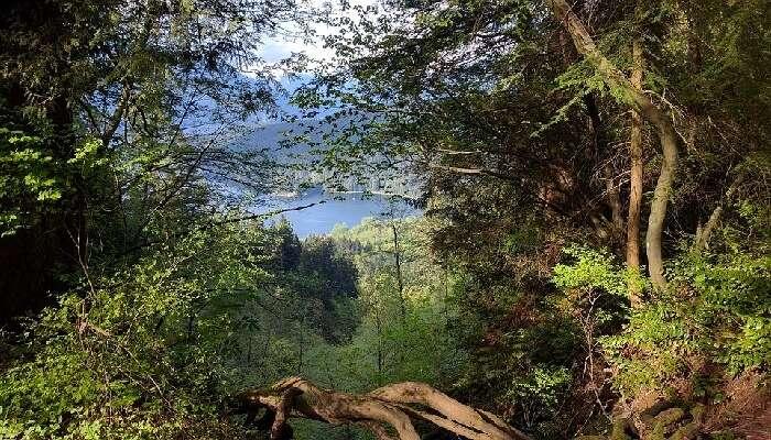Burnaby Mountain