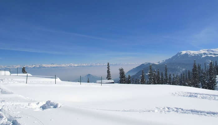 Some Shots At Ningle Nallah, Gulmarg