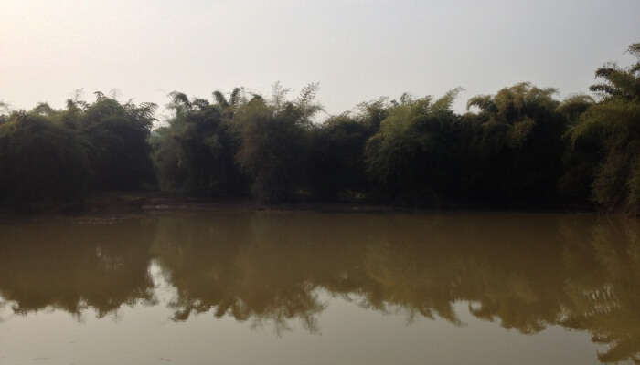 Chandaka Reserve Forest