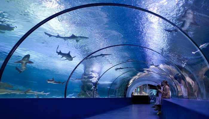Check Out The Antalya Aquarium