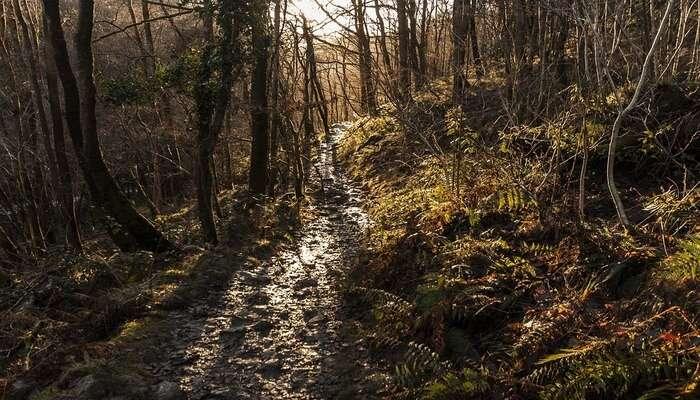 David Scott Trail