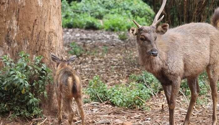 Deer park Ooty