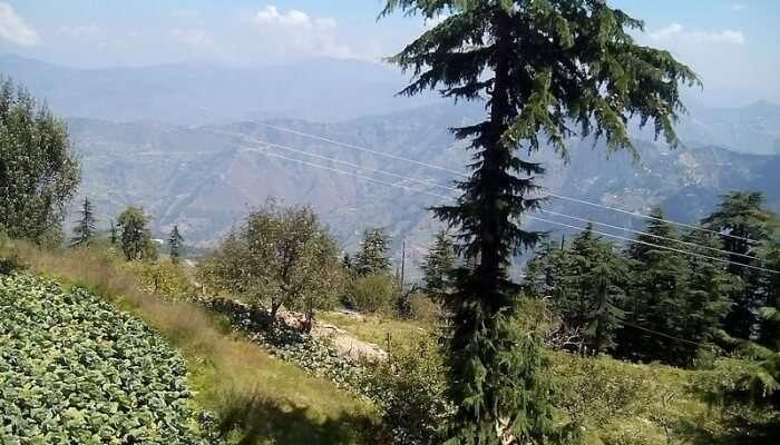 A Picnic At Fagu, Himachal