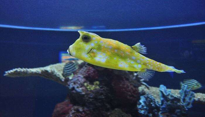 Explore The Underwater Life