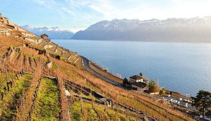 Vineyards Of Lavaux