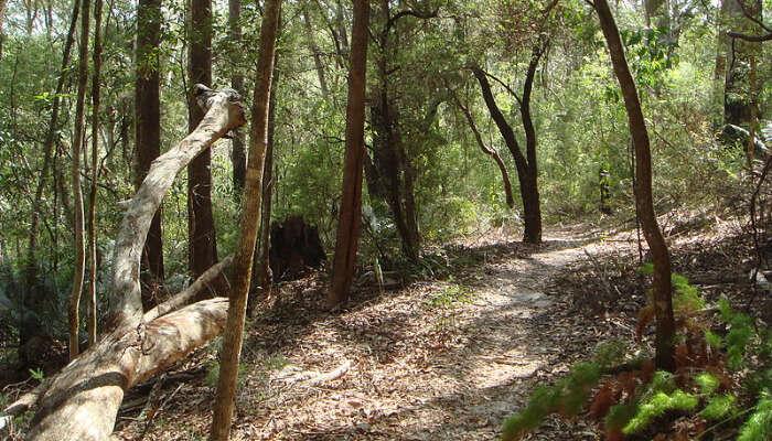 Fraser Island Great Walk