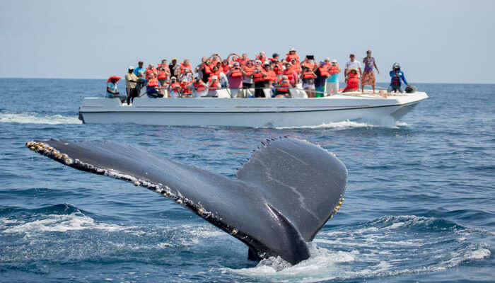 Get On A Boat For Whale Watching