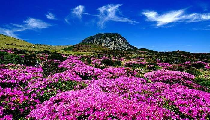 Halla Mountain South Korea