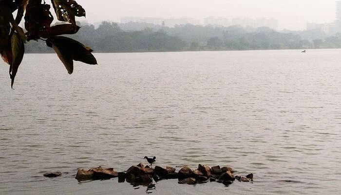 Hebbal lake_water_