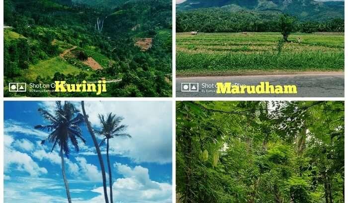 tea plantations of Sri Lanka